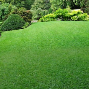 carpenter costin commercial residential lawn care
