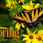 Spring Clean Up Landscape Service