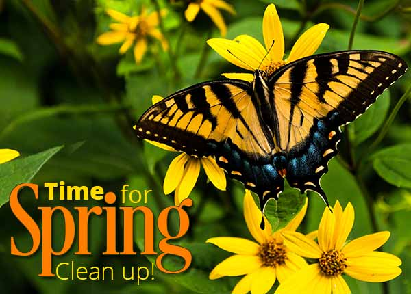 - Spring Clean-Up Remove Branches & Limbs Add New Mulch