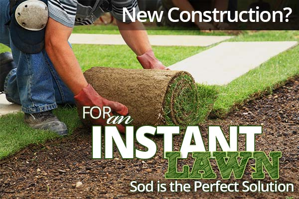 Sod installed right