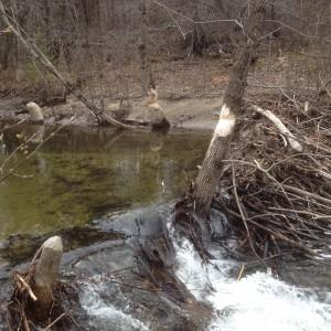 Beaver Dam, Carpenter & Costin Come Allive Outside