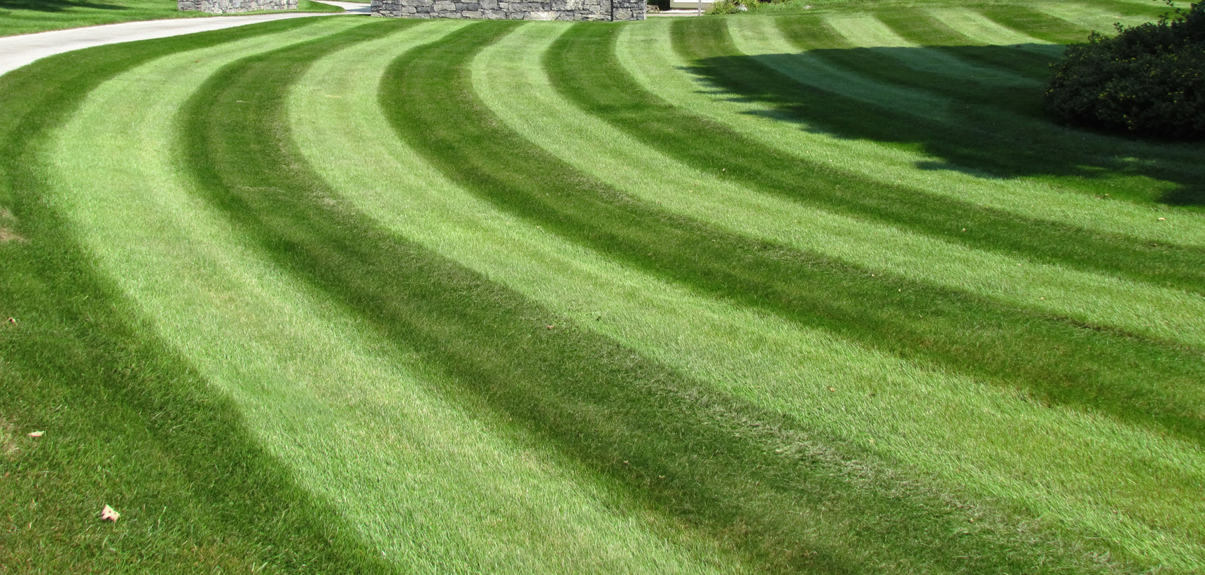 Commercial lawn care by Carpenter & Costin