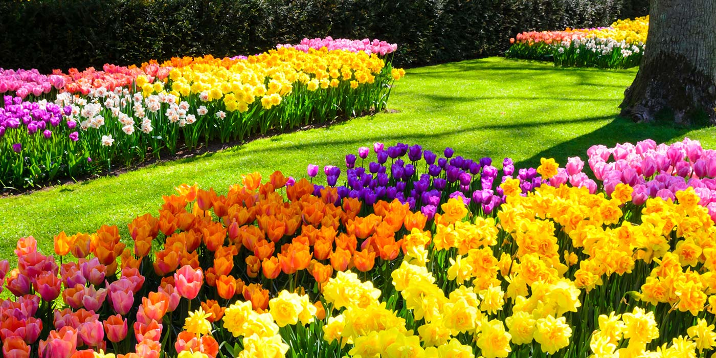 Flower bed ideas, Commercial landscapers in Vermont, Carpenter & Costin, Tulips in VT