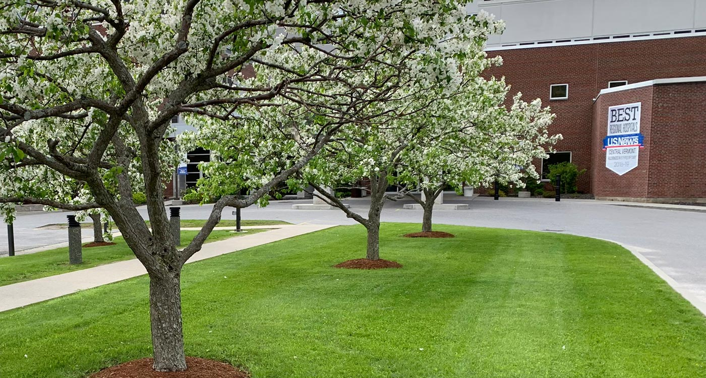 Lawn and ornamental trees in full bloom